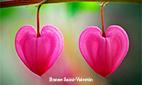 ecard1054.249901.tn.carte_st-valentin_2013_4_tn